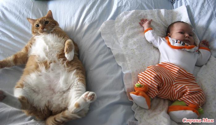 Дети и домашние животные страна мам