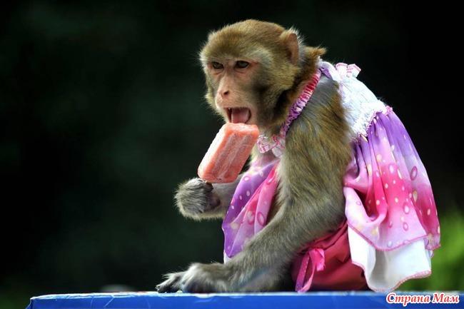 фото с обезьянкой комментарии