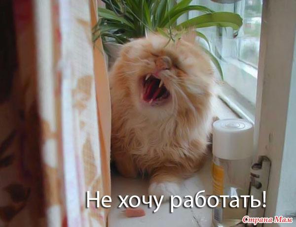 http://st1.stranamam.ru/data/cache/2010nov/08/31/965131_97076-700x500.jpg