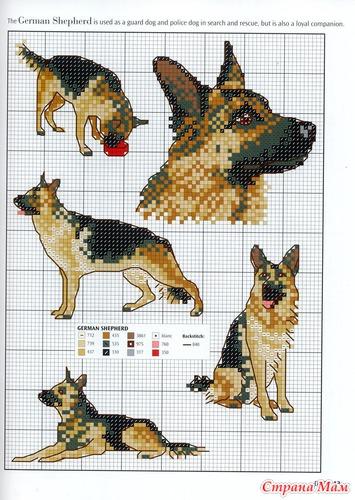 Схемы собак, кошек разных