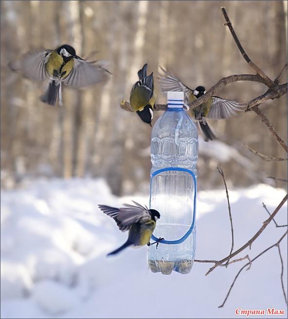 Зимние птицы своими руками