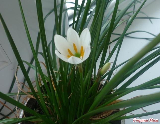 Что это за цветок