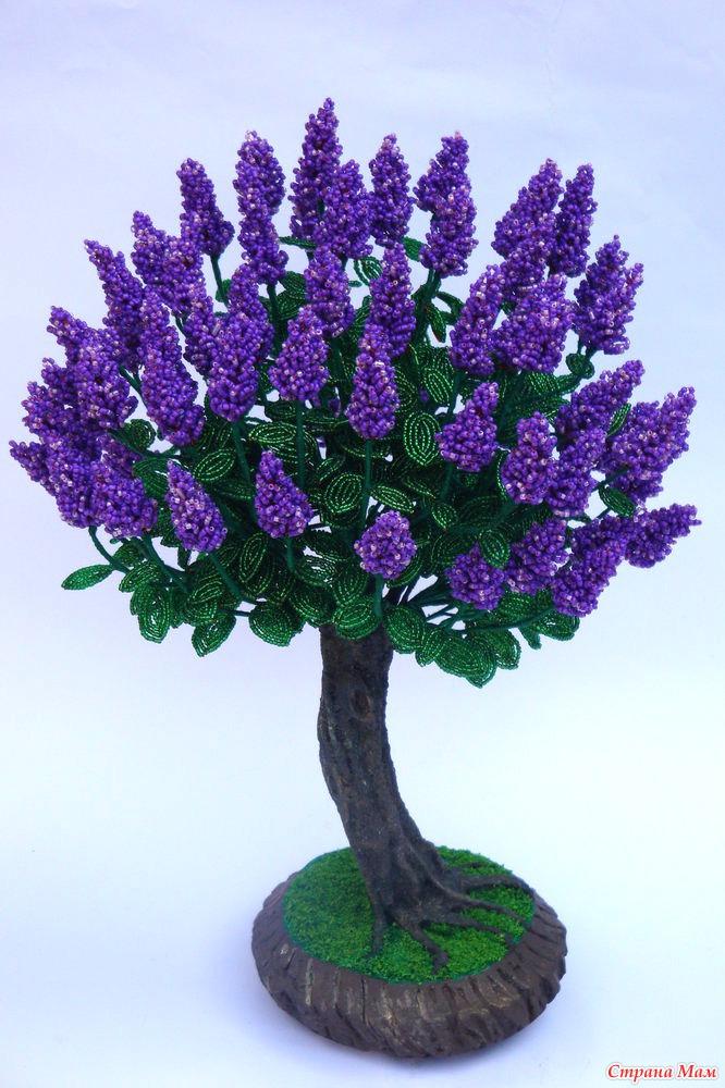 дерево Бонсай-сирень из