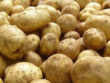 Новый способ выращивания картофеля