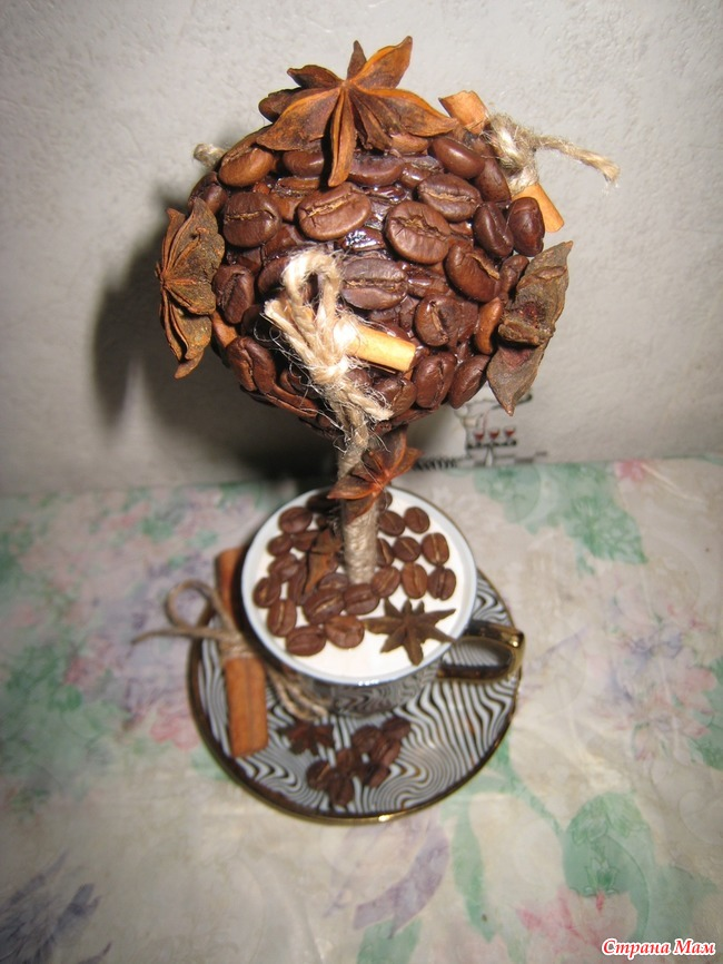 Кофейное дерево из зерна в домашних условиях 412