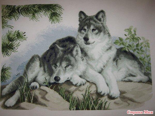 Ищу схему пары волков