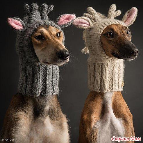 Шапулька для собаки