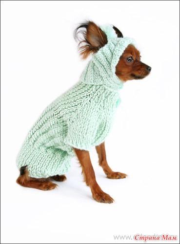 Вопрос про свитер для собаки.