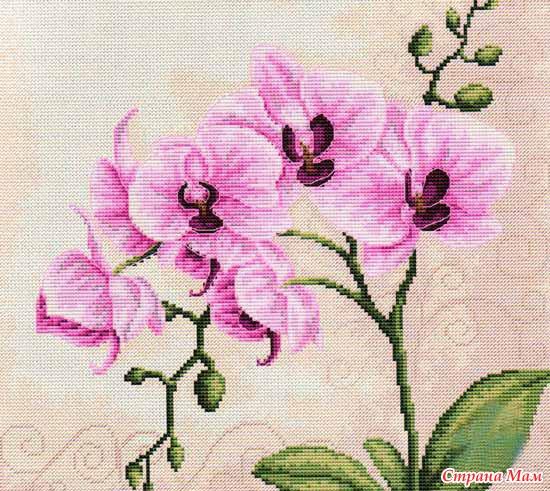 Ищу схему орхидеи, охота пуще