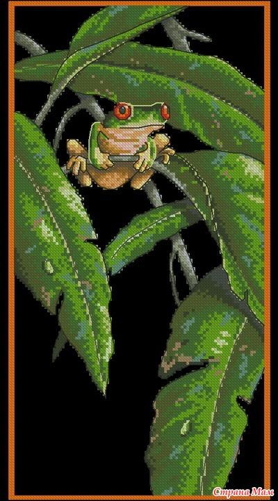 Древесная лягушка среди