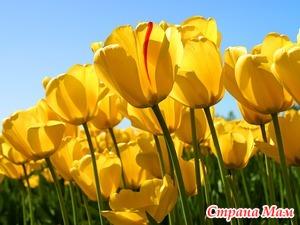 Сказка о тюльпанах