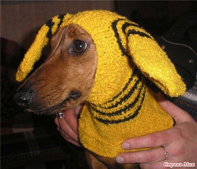 Вязаная шапка для собаки с