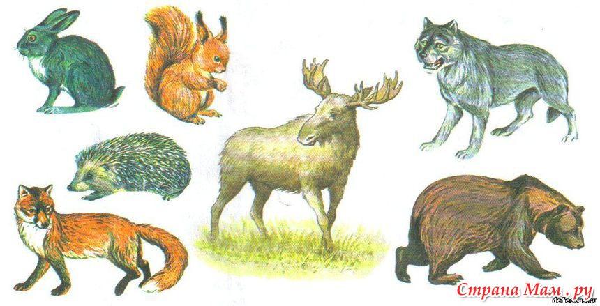 картинки про животных домашние и дикие
