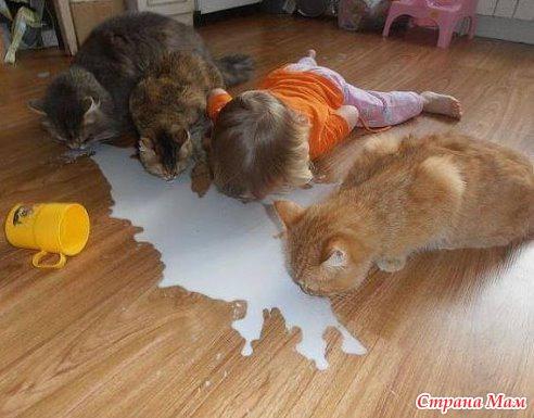 Если третий ребенок ест из миски кота