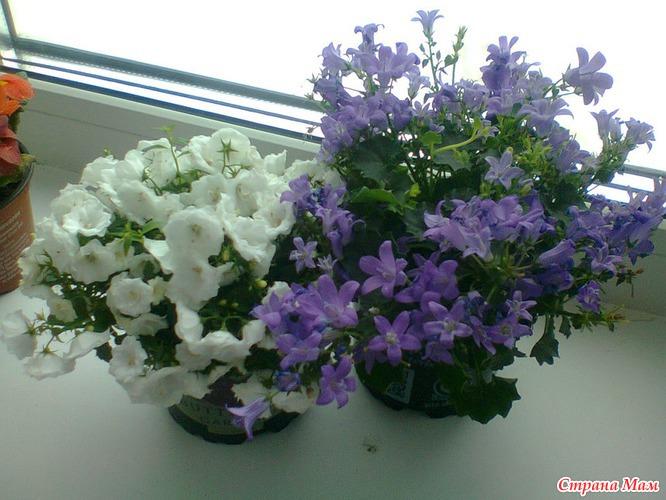 Цветы жених и невеста купить