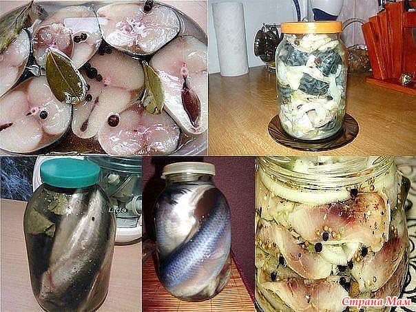 Как солить рыбу скумбрию в домашних условий