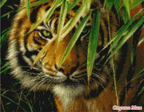 *Ищу схему тигра