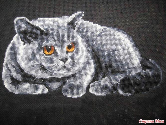 Кот британец от Риолис моя
