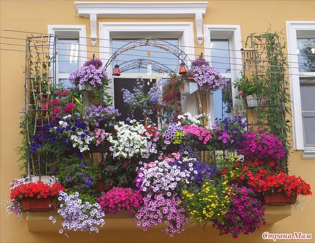 Цветы на балконе. Какие цветы на балконе посадить 40