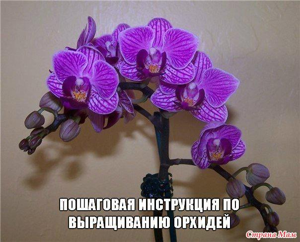 Паста Для Орхидей Цитокининовая Инструкция - фото 2