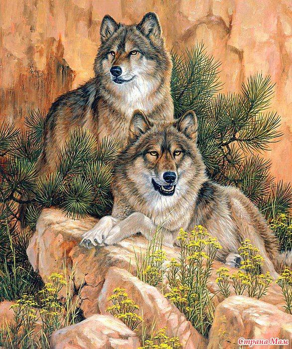 Волк раскраска по номерам