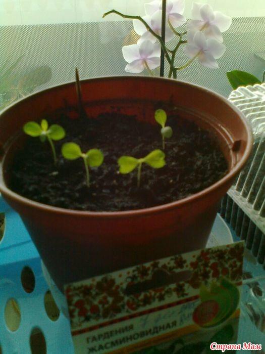 Как посадить семечко у в домашних условиях 205