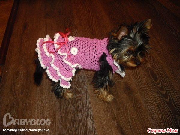 Как связать платье для маленькой собачки крючком