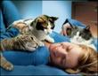 Люди и кошки: плюсы и минусы совместного проживания