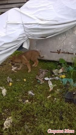 Восемь (!) бездомных щенков