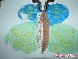 Бабочки бывают разными…