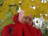 Первая осень.  Вот на ветке лист кленовый.  Нынче он совсем как новый!  Весь румяный, золотой.  Ты куда, листок? Постой!