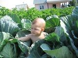 Да, дети из капусты