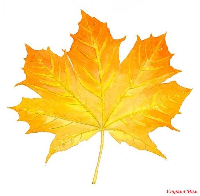 кленовые листья картинка рисунок был