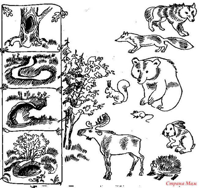 Кто где живет дикие животные соедини картинки