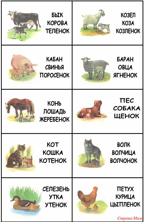 названия детенышей домашних животных с картинками