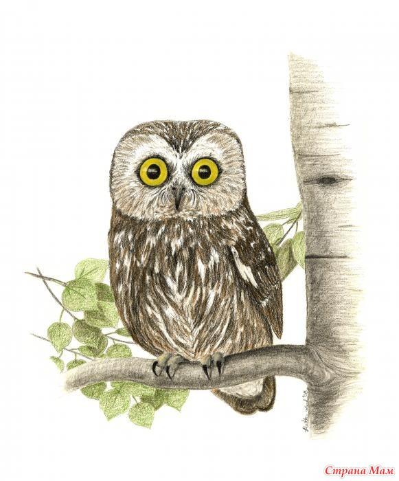 рисунок сова на ветке дерева утренней трапезе