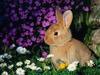 Наши пушистики-любители кроликов