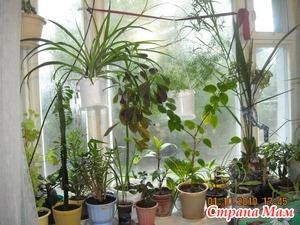 Оформление зеленого окна