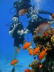 Яркие краски подводного мира! Это было шикарно!