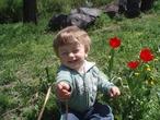 Димон 1,4 в тюльпанах
