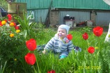 Анна в тюльпанах