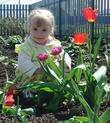 В клумбе с тюльпанами