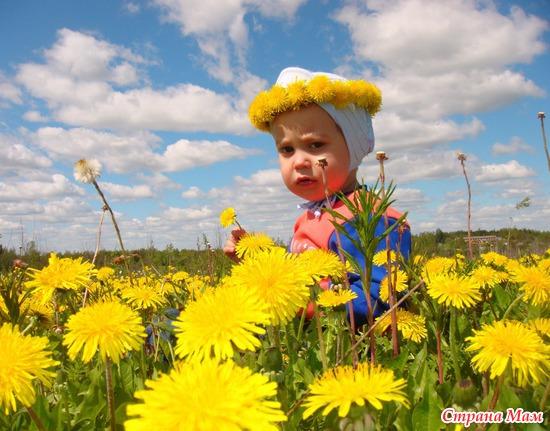 Ярославчик в поле