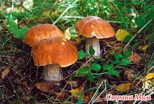 Консервированные маринованные грибы