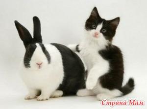 Декоративные кролики. Опыт совместного существования.