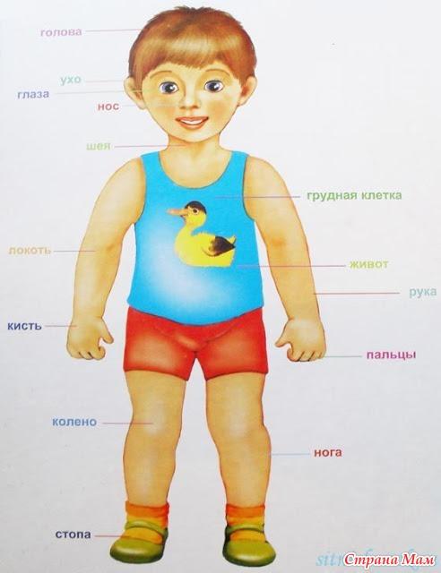 """ТН """"тело человека"""" - Развиваем ребенка дома (от 0 до 7 лет ..."""