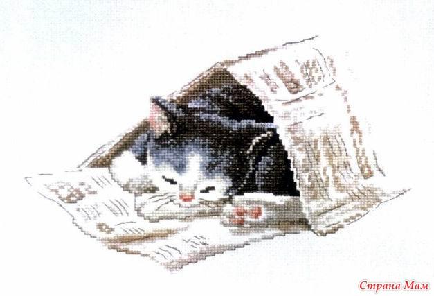 Спящая кыса