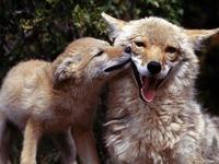 """Детский стих""""мамы и детки"""" о животных"""