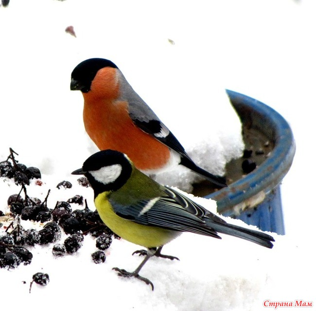 мдм состоялась фото снегиря и синицы делаем