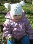 Любимый цветочек Маргаритка в весеннем лесу.